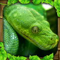 蟒蛇模拟器中文版