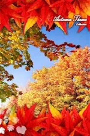 秋天的梦想主题壁纸APP图2