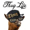 ThugLife软件