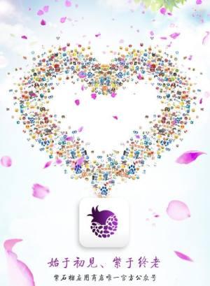 紫石榴应用商城app图4