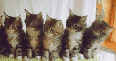 抖音猫咪摇头表情怎么发 评论猫咪摇头发送教程[多图]