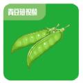 青豆短视频app官方版软件 v1.0